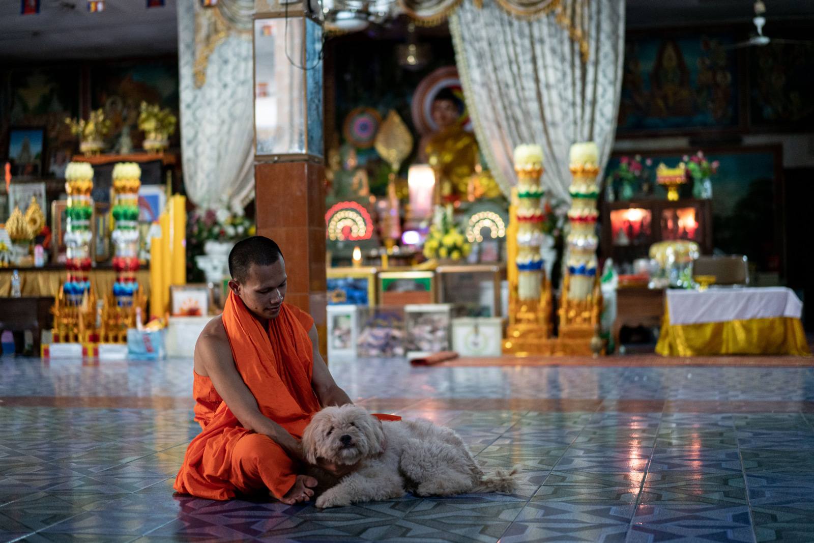 A monk at a pagoda in Phnom Penh with a community-owned dog. Unwanted pets are often abandoned at pagodas, frequently becoming a collective responsibility.